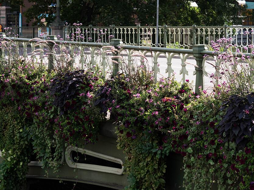 Göteborg er fyldt med blomster – også i september