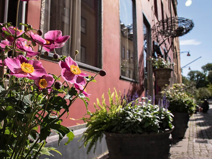 Blomster overalt i Göteborg