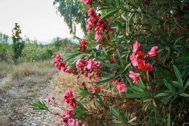 Smuk og vild natur om Bagheera. I baggrunden anes bjergene mod vest. Korsika