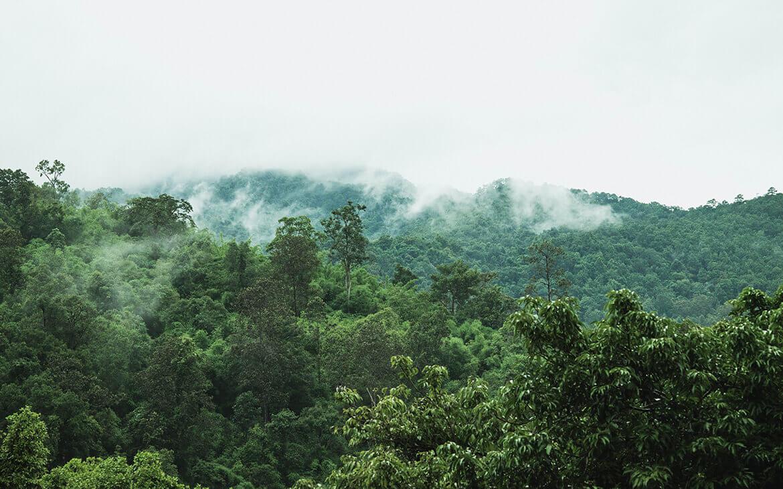 Mae Sa Valley, Thailand