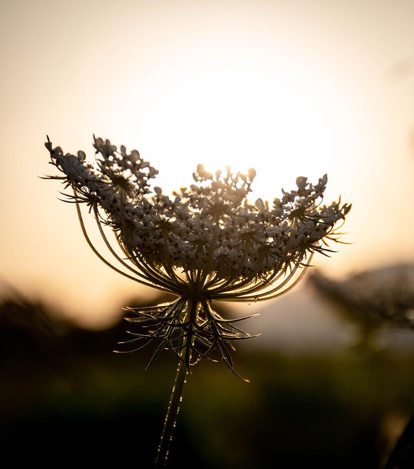 Blomst op mod solen