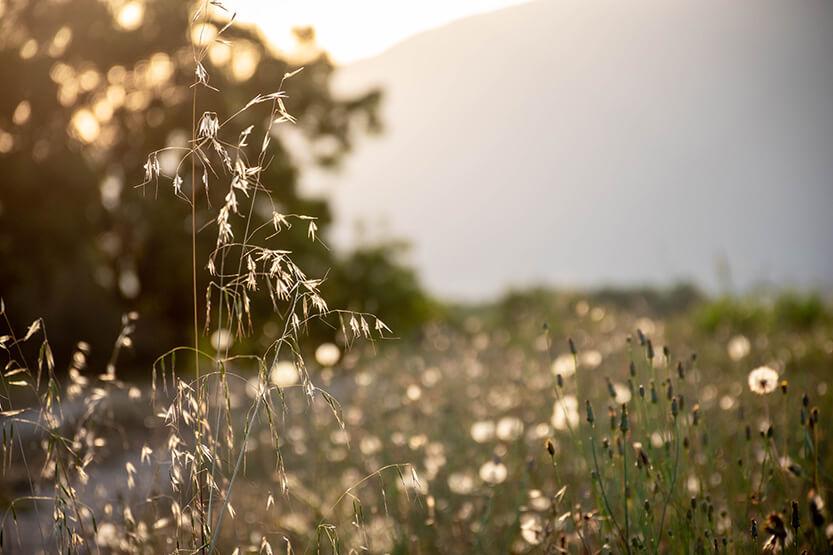 Solen sidste stråler når stadig op over bjerget