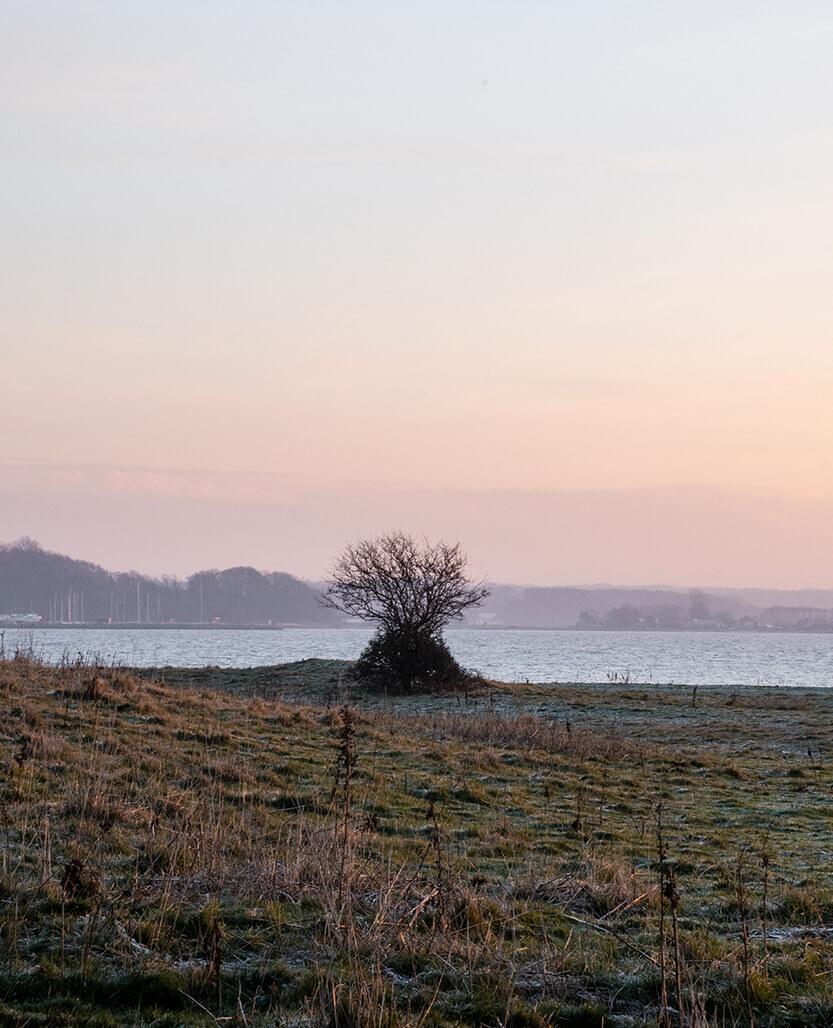 Kalø Slotsruin en januar morgen