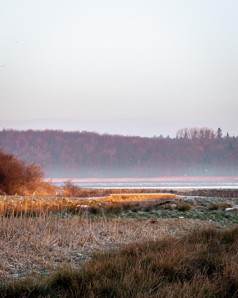 Udsigt ind mod skoven fra Kalø Slotsruin, Mols