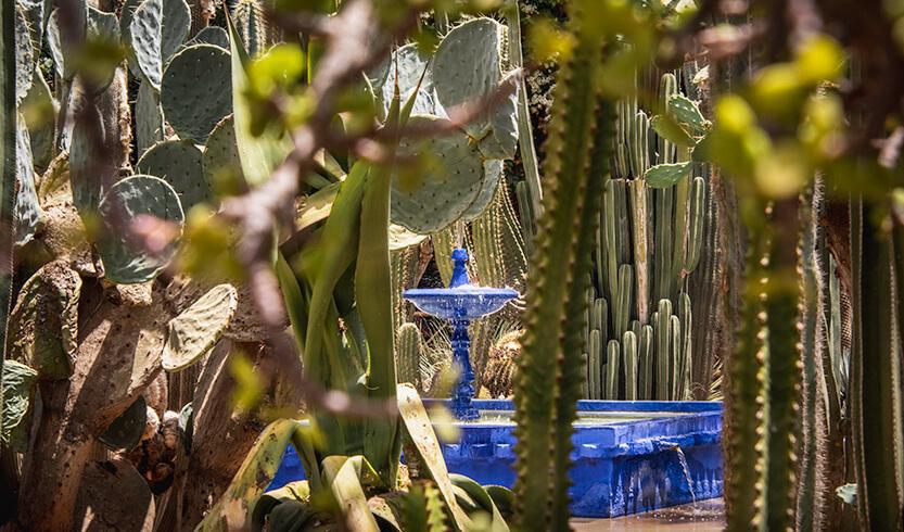 Blåt springvand midt i Jardin Majorelle