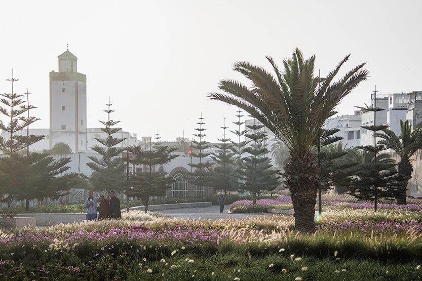 Udenfor Essaouiras bymur vokser de smukkeste palmer, træer og vilde blomster