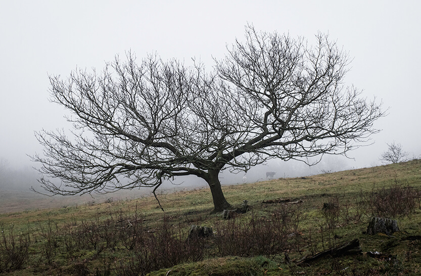 Træet vokser som bakken står...