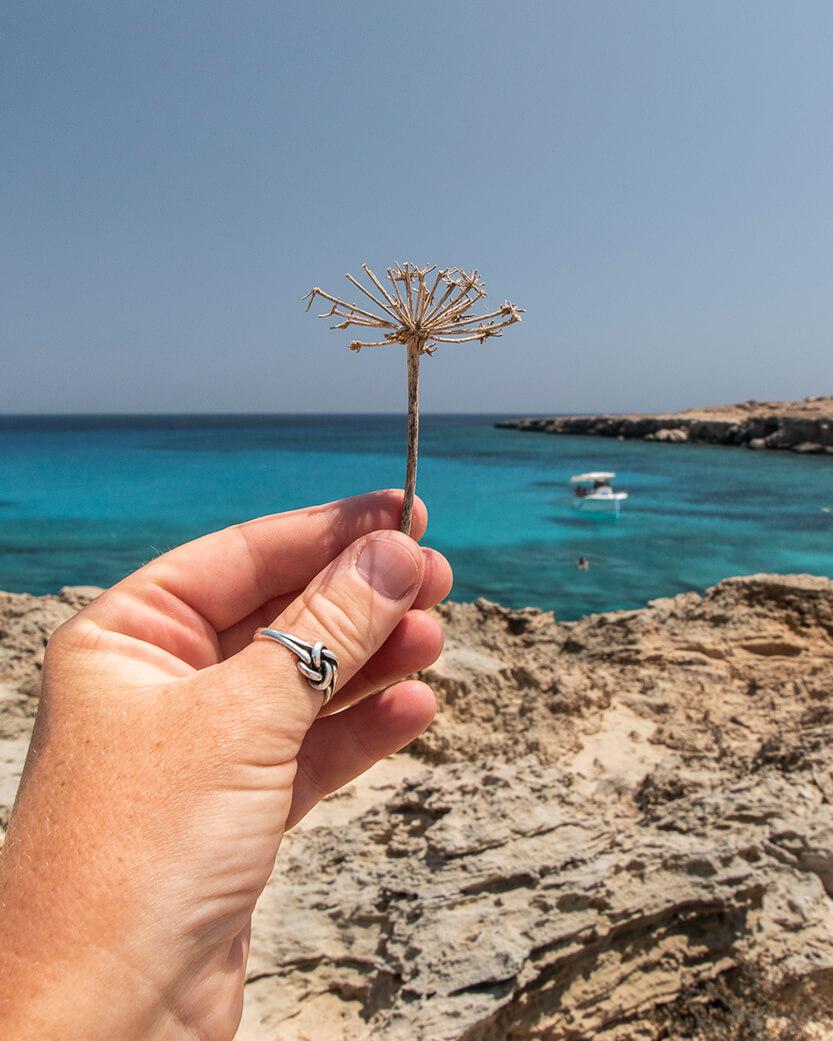 Der er også lidt blomster på Cypern. Her på Cape Greco.