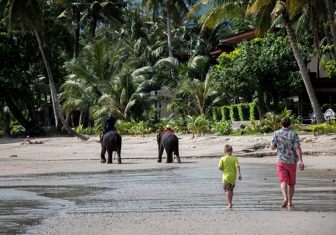 Elefanter på stranden - Koh Chang, Thailand