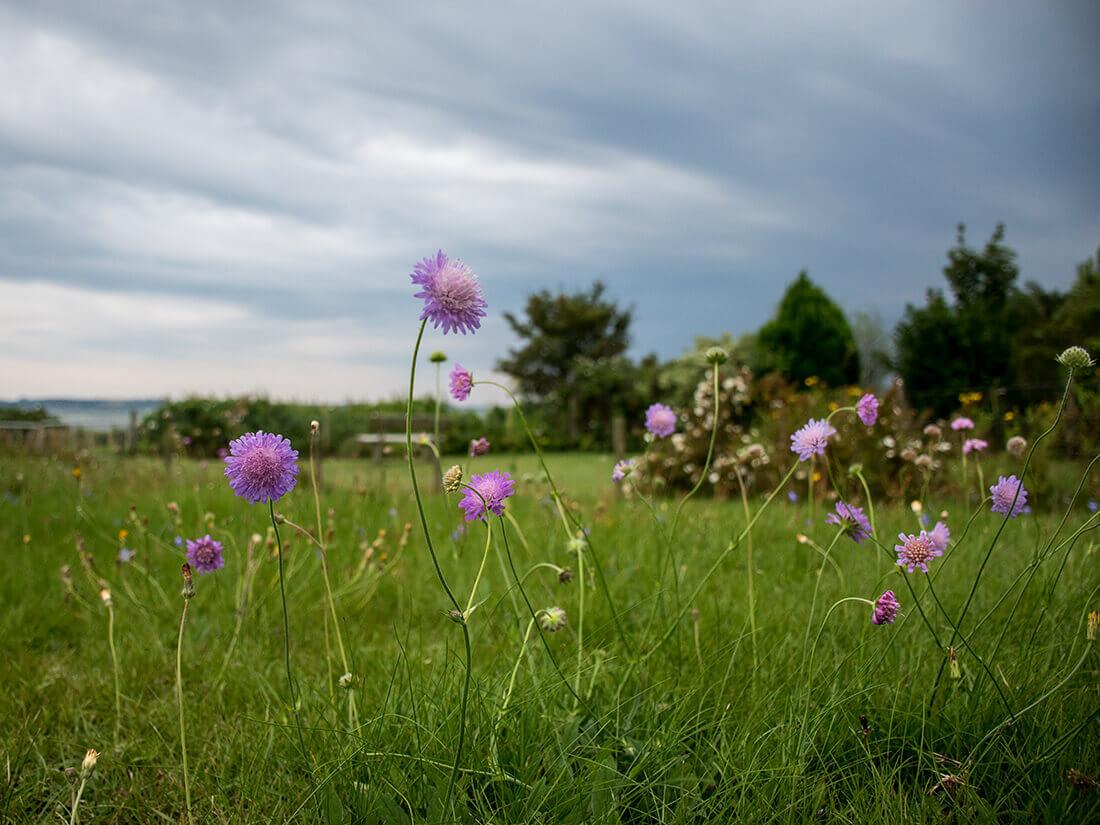 Engelsk græs